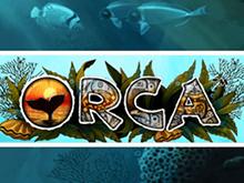 Казино на деньги Orca